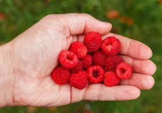 Raspberry Ketones For Keto