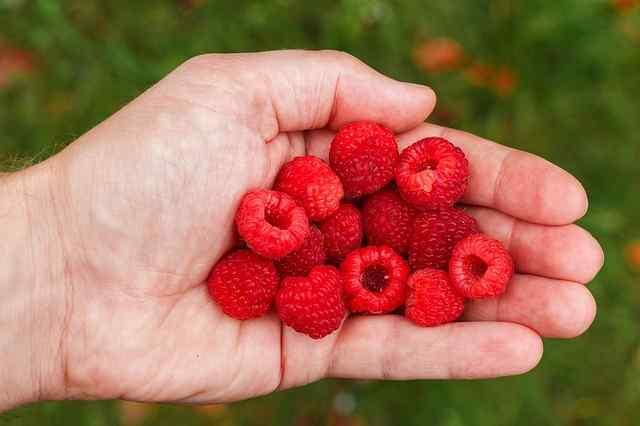 Raspberry Ketones For Keto